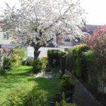Cerises, Abondance et autres joyeusetés du printemps